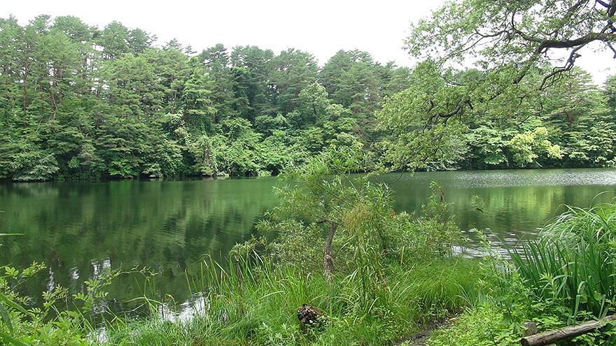 北塩原村「五色沼自然探勝路」 | ふらっとおでかけ 福島ぶらり ...